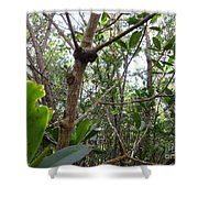 Crabs On A Tree Shower Curtain