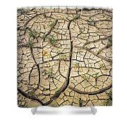 317805-cracked Mud Patterns  Shower Curtain