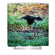 Grackle In The Morning  Shower Curtain