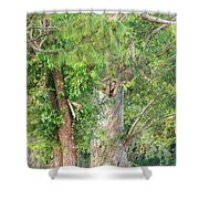 Craggy Tree For Will Shower Curtain