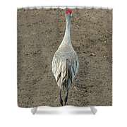 Crane Crossing Shower Curtain