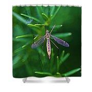 Crane Fly Shower Curtain