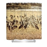 Cranes In The Morning Mist Shower Curtain