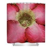 Craquelure Pink Flower Shower Curtain