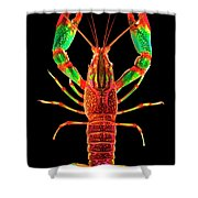 Crawfish In The Dark - Rouillegreen Shower Curtain