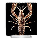 Crawfish In The Dark - Sepia Shower Curtain