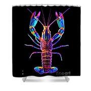 Crawfish Inthe Dark Allsat Shower Curtain