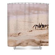 Crawling Crabb Shower Curtain