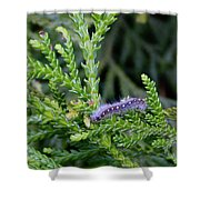Crawlly Caterpillar Shower Curtain