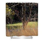 Crazy Grasses Shower Curtain