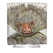 Crazy Two Toed Sloth Shower Curtain
