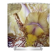 Cream And Purple Iris Shower Curtain