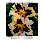 Cream And Purple Lilies Shower Curtain