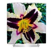 Cream And Purple Lily Macro Shower Curtain