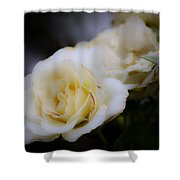 Creamy Dreamy Rose Shower Curtain