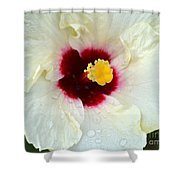 Creamy Hibiscus With Rain Drops Shower Curtain