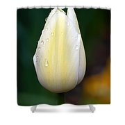 Creamy Lemony Tulip Shower Curtain