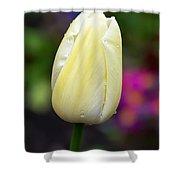 Creamy Pale Lemon Tulip Shower Curtain