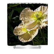 Creamy Poppies Shower Curtain