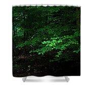 Creek Bank Shower Curtain