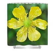Creeping Buttercup Shower Curtain