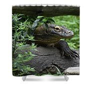 Creeping Komodo Monitor Climbing Under A Fallen Log Shower Curtain