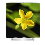 Creeping Woodsorrel Square Shower Curtain