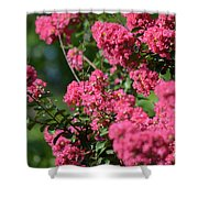 Crepe Myrtle Blossoms 2 Shower Curtain