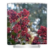 Crepe Myrtle Tree Blossoms Shower Curtain