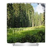 Crescent Meadow In Sequoia Shower Curtain