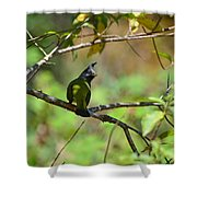 Crested Finchbill 2 Shower Curtain
