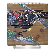 Crested Honeycreeper Shower Curtain