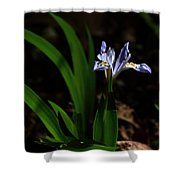 Crested Iris In Lost Valley Shower Curtain