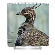 Crested Tinamou Shower Curtain