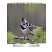 Crested Tit Pine Shower Curtain