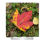 Crimson And Clover Shower Curtain