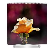 Crimson And Gold Shower Curtain
