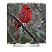 Crimson Cardinal Shower Curtain