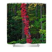 Crimson Creeper Shower Curtain