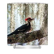 Crimson Highlights Shower Curtain