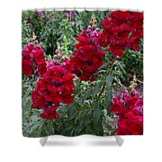 Crimson Snapdragons Shower Curtain