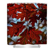 Crimson Oak Shower Curtain