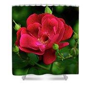 Crimson Red Rose By Kaye Menner Shower Curtain