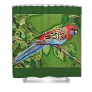 Crimson Rosella Shower Curtain