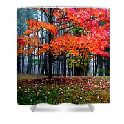 Crimson Tree Shower Curtain