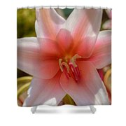 Crinum Lilies Shower Curtain