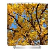 Crisp Autumn Day Shower Curtain