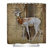 Critically Endangered Dama Gazelle Shower Curtain