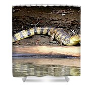 Croc Time Shower Curtain