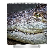 Crocodile Eye Shower Curtain